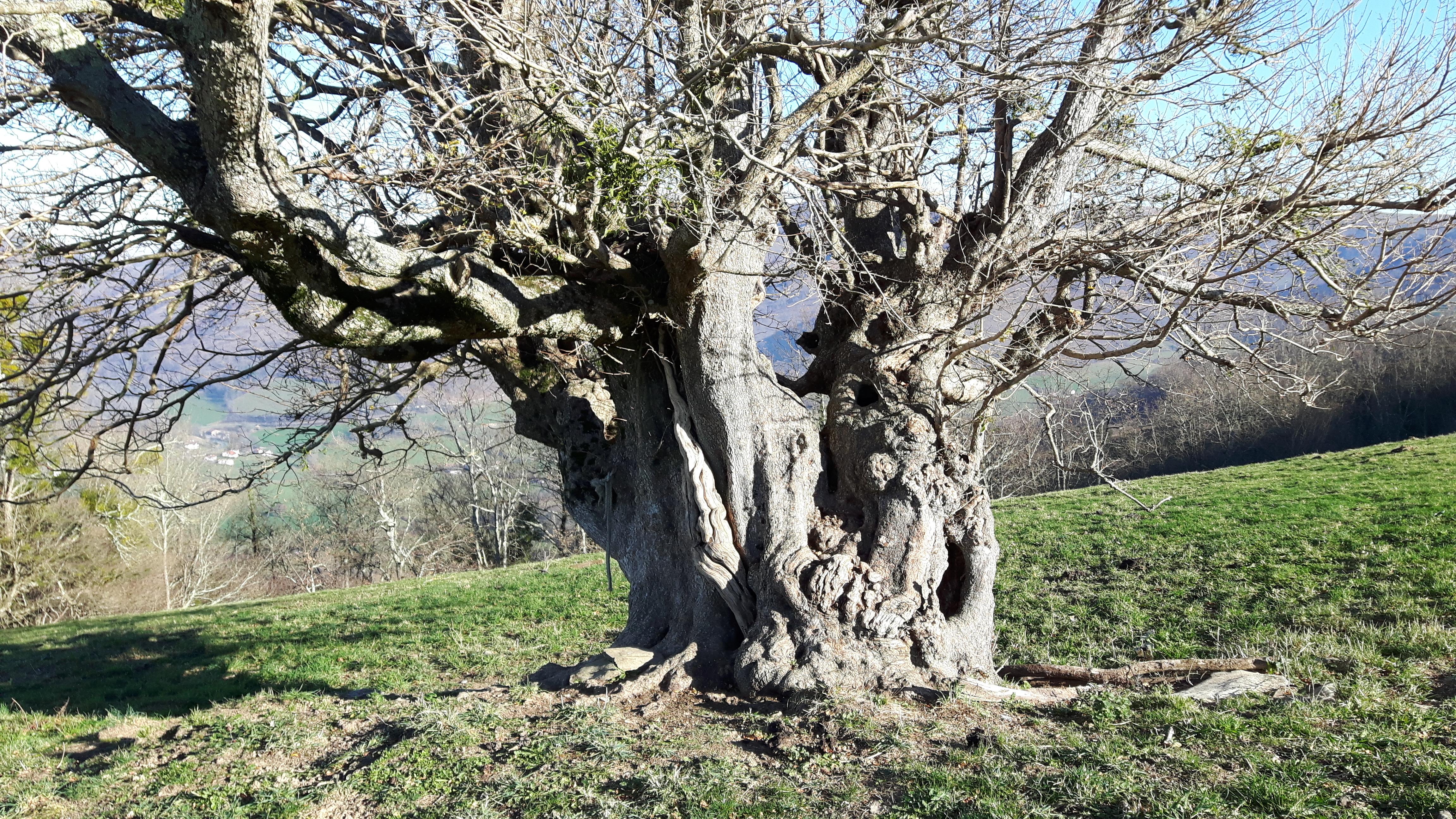 rencontres arbre champetre