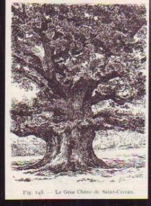 1932 -- LE GROS CHENE DE SAINT CIVRAN