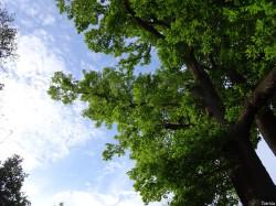 2015 05 02 conf. arbres remarquables Y.Maccagno Anduze (11)