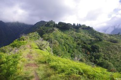 Albizias falcataria du pied de l'Aoraï, Tahiti, Rémy Canavesio (1)