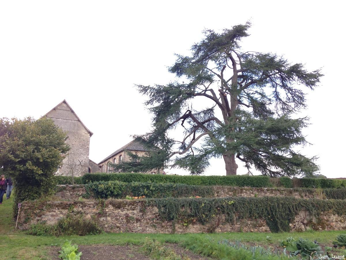 Cèdre abbaye de Port Salut, Entrammes, Mayenne, Jean Luard (4)