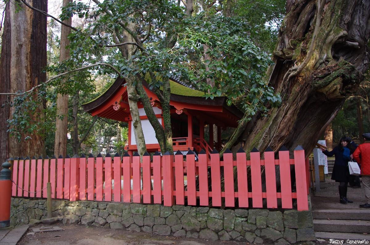 Camphrier de Nara, Japon, Rémy Canvesio (5)
