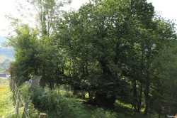 Châtaignier de guillamunia, Saint Just Ibarre , Yannick Morhan