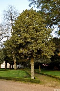 Château-Colbert- Houx 3