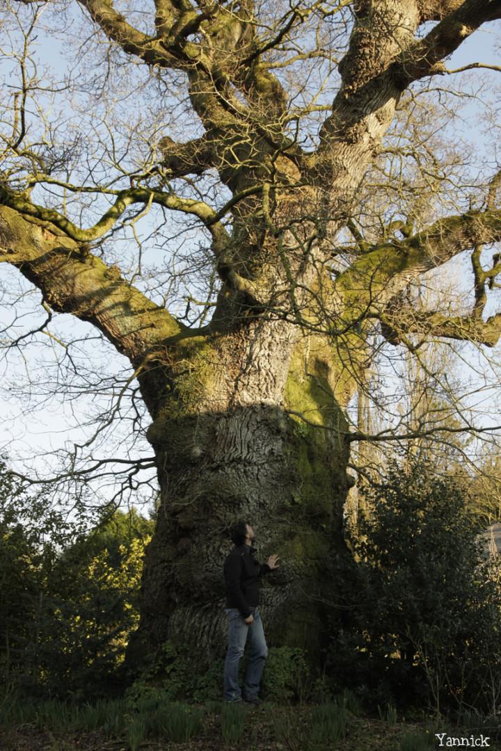 Chêne de Kerverne, Lignol, Morbihan Yannick Morhan (7)