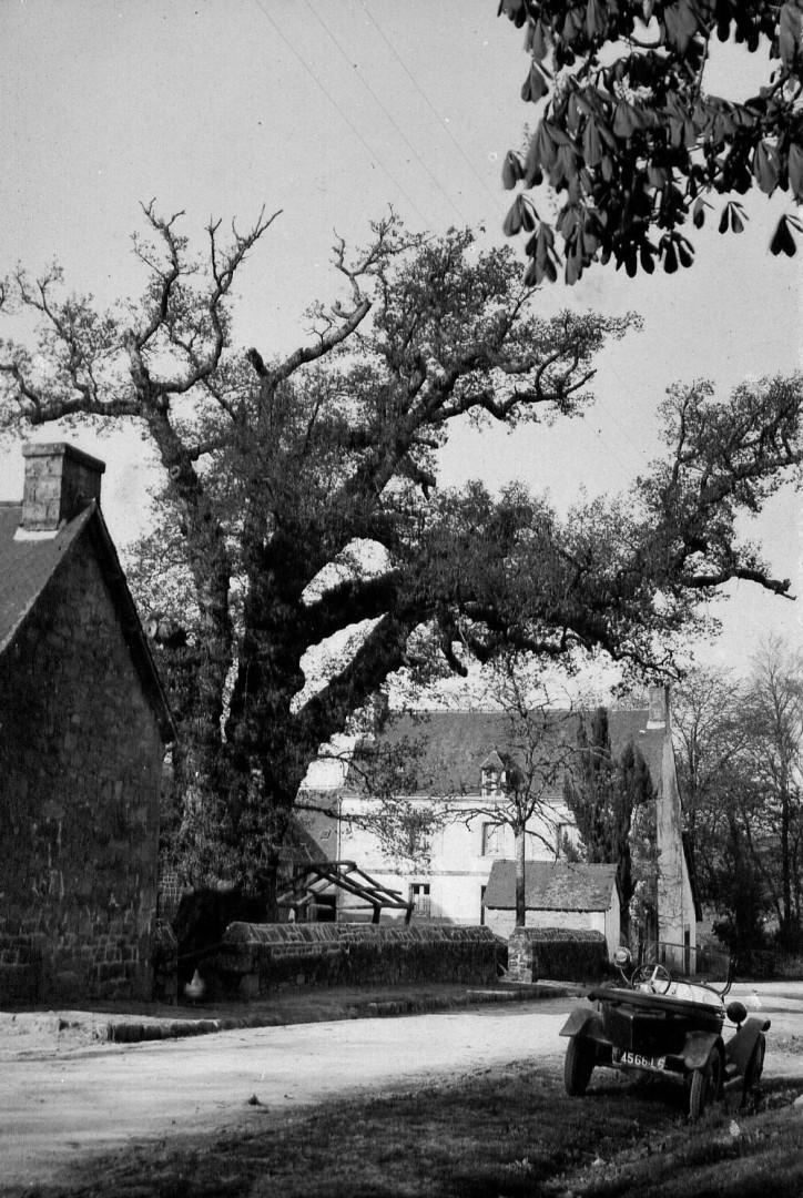 Chêne de Kerverne avant 1939 Lignol, Morbihan