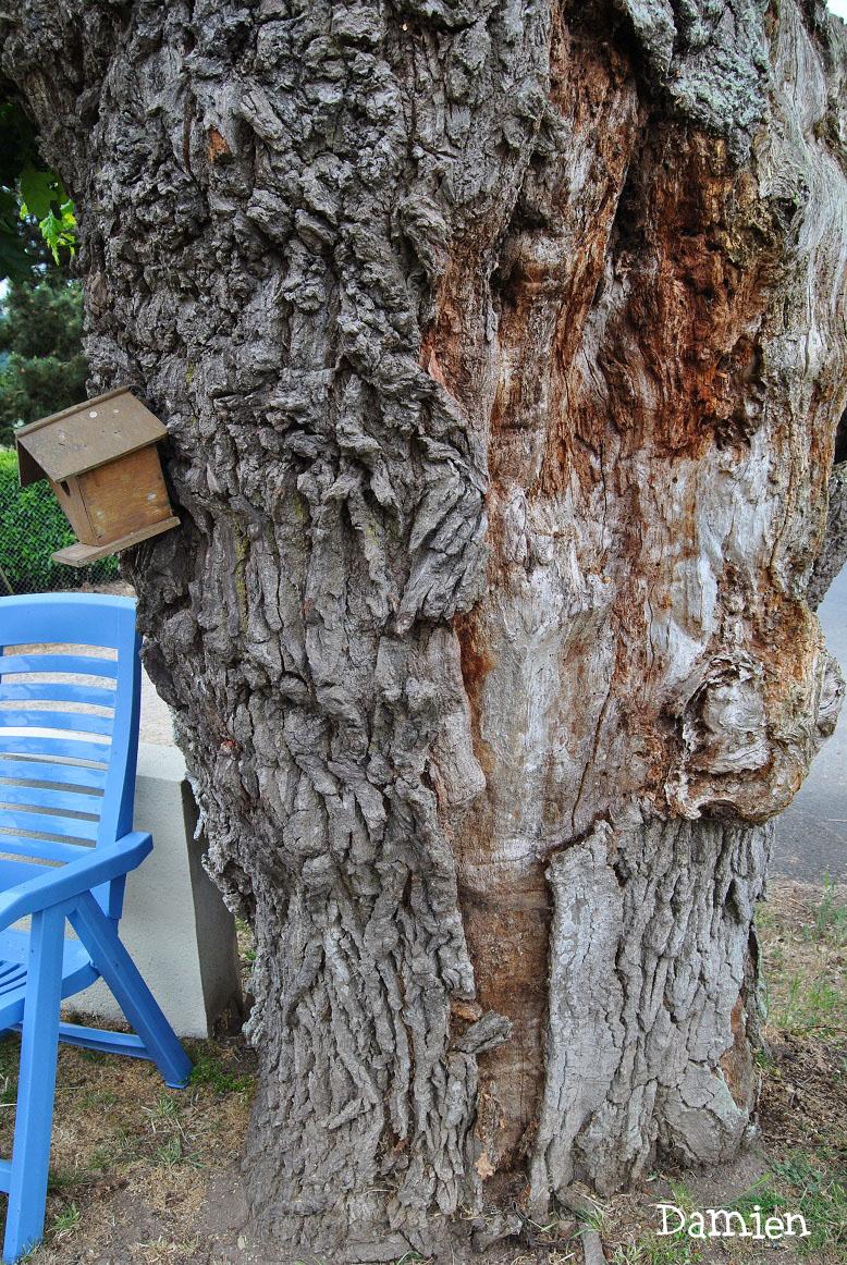Chêne de Saint Rémy, Calvados, Damien Levillain (4)