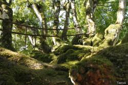 Charme de Rohan, Morbihan Yannick Morhan (3)