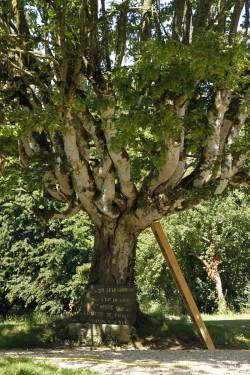 Charme de Rohan, Morbihan Yannick Morhan (8)