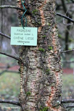 Chene-liège-arboretum-gieres