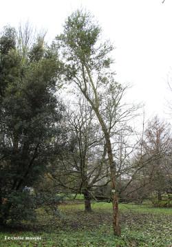 Chene-liège-arboretum-gieres2