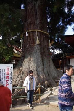Cryptoméria de Nara, Japon, Rémy Canvesio (2)