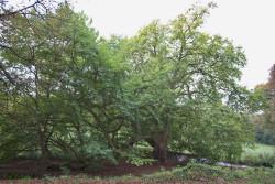 parc reamenage par barillet deschamps en 1860 surface sol environ 1500 m2