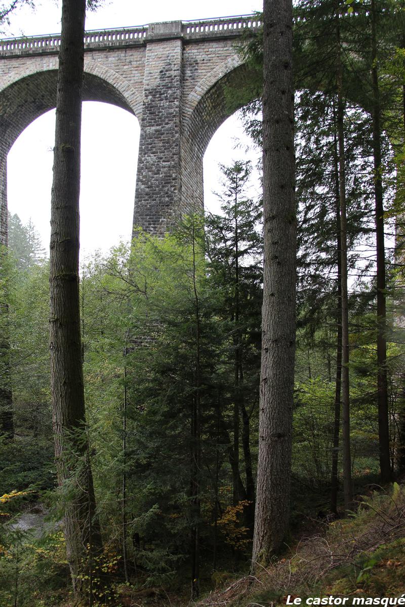 Les douglas du viaduc des Farges (Meymac, Corrèze) sont-ils toujours ...