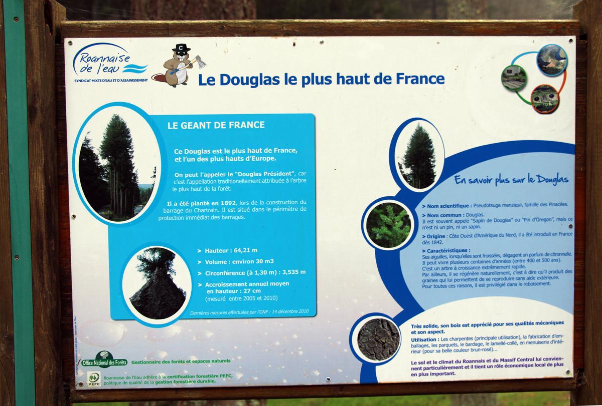 Douglas-renaison02
