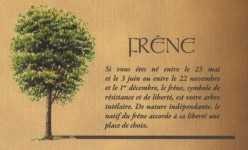 FRENE