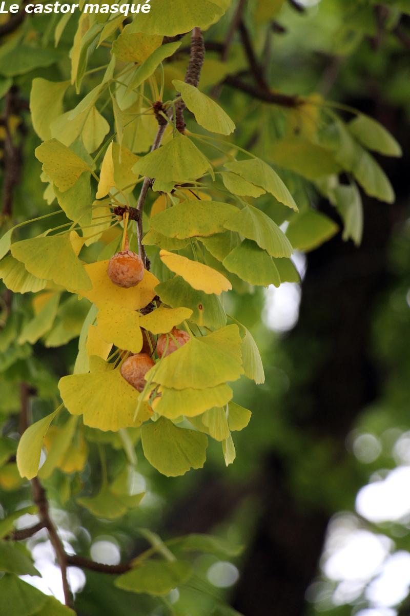 Mais Reprenons Tout Dabord La Visite Avec Un Magnifique Oranger Des Osages Ou Maclure Pineux Dans Une Forme Rampante Trs Spectaculaire