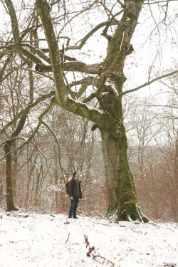 Hêtre rescapé Forêt de Verdun, Meuse, Yannick Morhan (10)