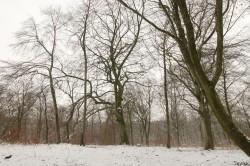 Hêtre rescapé Forêt de Verdun, Meuse, Yannick Morhan (8)