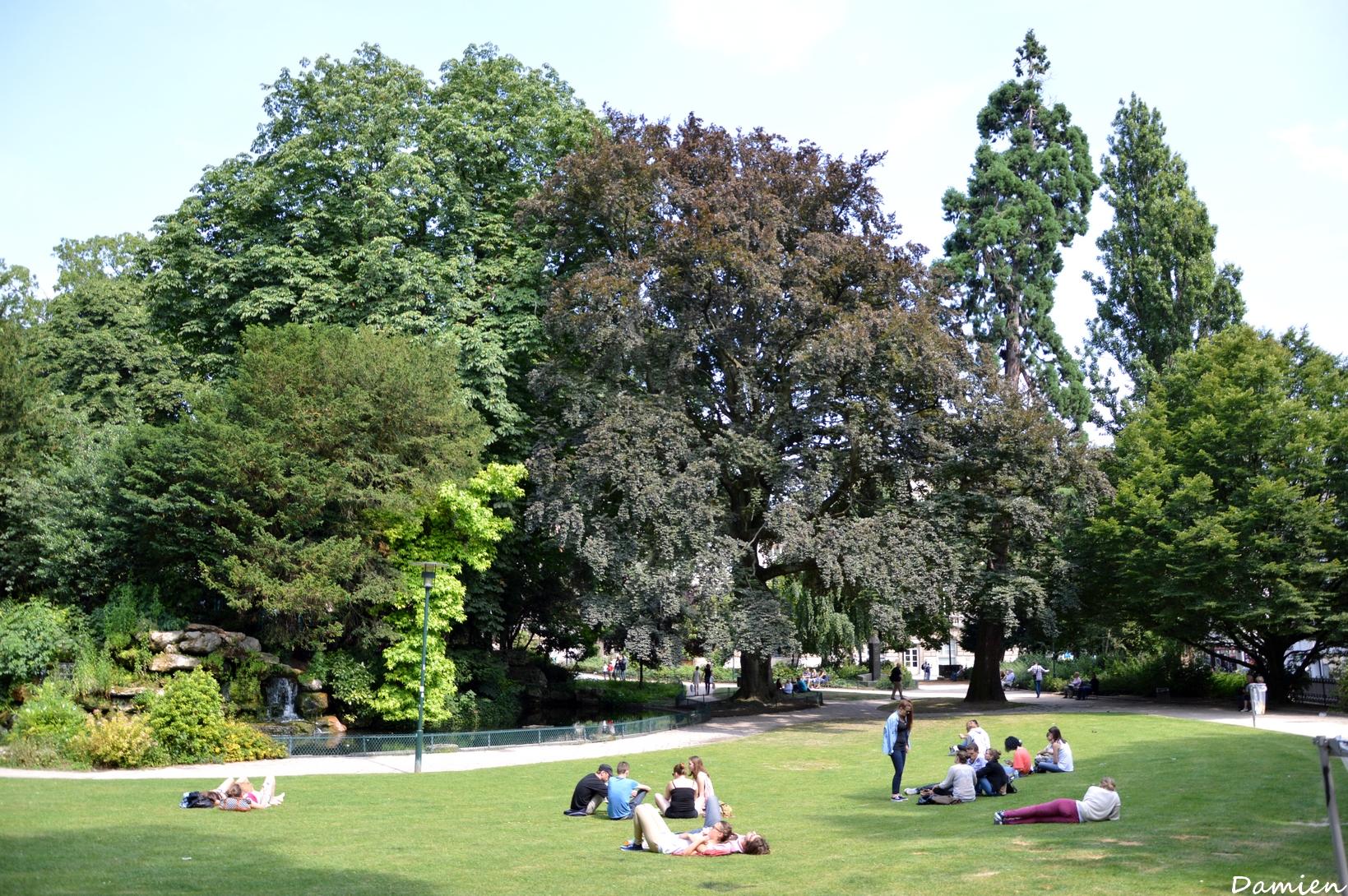 Hêtre square Verdrel Levillain Damien (9)