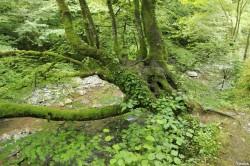 Hêtres de Larrau, Pyrénées Atlantiques Yannick Morhan (1)