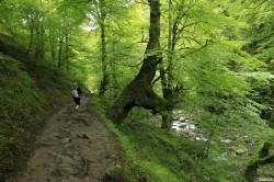 Hêtres de Larrau, Pyrénées Atlantiques Yannick Morhan (3)