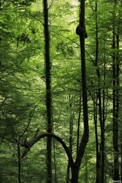 Hêtres de Larrau, Pyrénées Atlantiques Yannick Morhan (7)