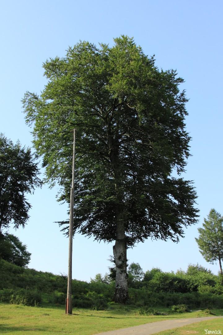 Hêtres du col d'Hosta, Lecumberry Pyrénées Atlantiques, Yannick Morhan (6)