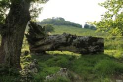 Hêtres du col d'Hosta, Lecumberry Pyrénées Atlantiques, Yannick Morhan (9)