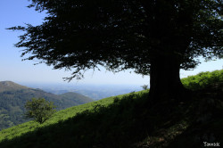 Hêtres et chênes dun mont Ibanteli Sare Yannick Morhan (17) copie