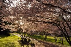 Hanami -Parc Oriental Maulévrier 02 © Yanick