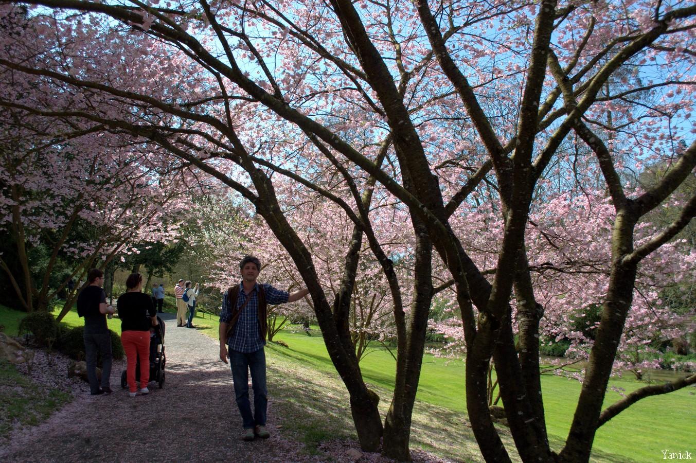 Hanami -Parc Oriental Maulévrier 04 © Yanick