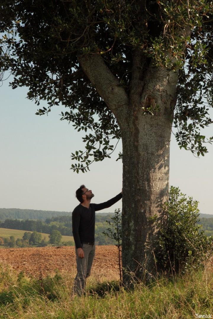 Houx de l a pinardière, Vaunoise, Orne, Yannick Morhan (2)