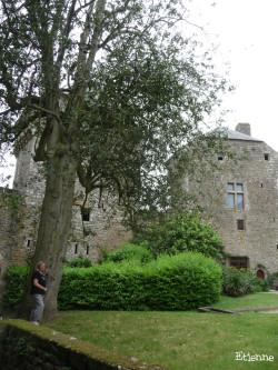 Houx du château de Lassay-les-Château, Mayenne Etienne (2)