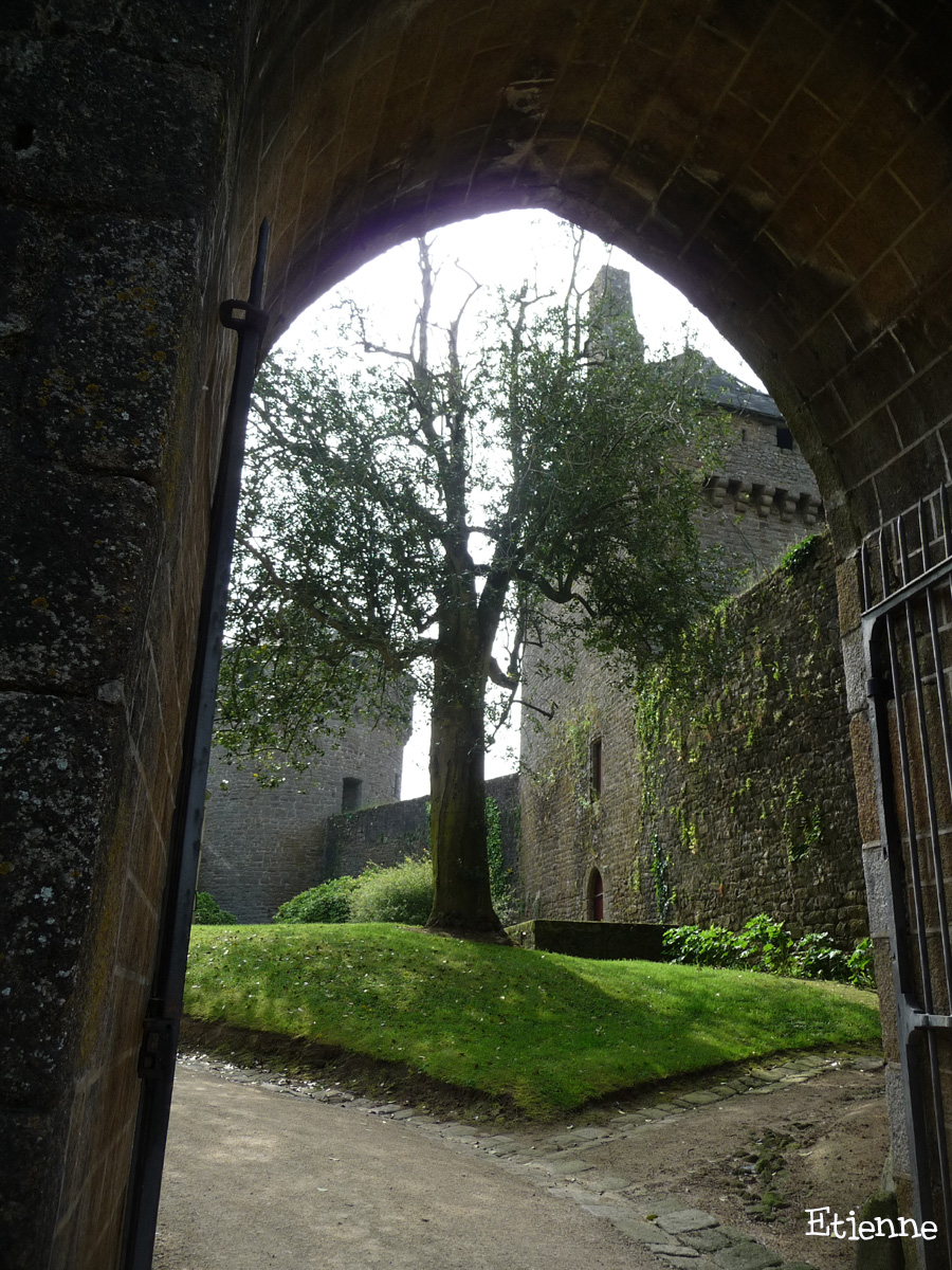 Houx du château de Lassay-les-Château, Mayenne Etienne (6)