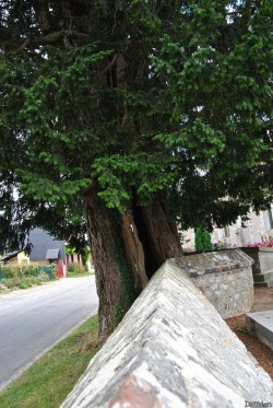 If La Neuville-du-Bosc (6)