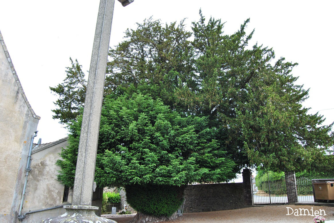 If de Saint Rémy Calvados, Damien Levillain (4)