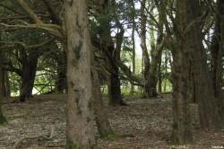If du Mize Maze de Breamore, Hampshire, Yannick Morhan (15)