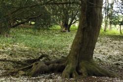 If du Mize Maze de Breamore, Hampshire, Yannick Morhan (16)