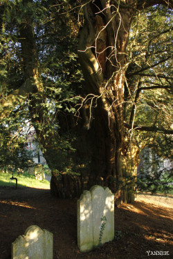 Ifs Hambledon, Surrey Angleterre Yannick Morhan (8)