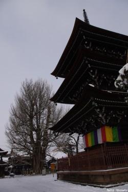 Le Gingko géant de Takayama, Japon, Rémy  Canavesio (2)