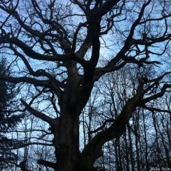 Le chêne de Jaulgonne, Aisne, Michel Collin (8)