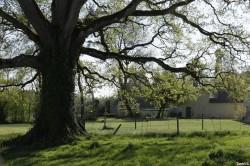 Le chêne de la Hardouinais Saint Launeuc Yannick Morhan (10)