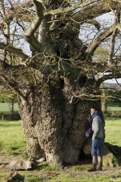 Le chêne de l'an mille, Limoelan en 2014, Sévignac, Côtes d'Armor Yannick Morhan (11)