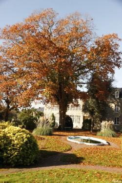 Le chêne rouge de  la Mennaie, Ploërmel Morbihan, Yannick Morhan (4)