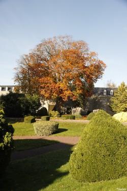 Le chêne rouge de  la Mennaie, Ploërmel Morbihan, Yannick Morhan (5)