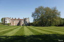 Le gros platane de Mottisfont Abbaye, Angleterre Yannick Morhan (7)