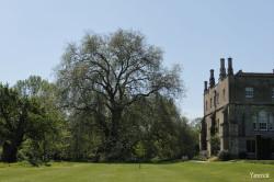 Le gros platane de Mottisfont Abbaye, Angleterre Yannick Morhan (8)