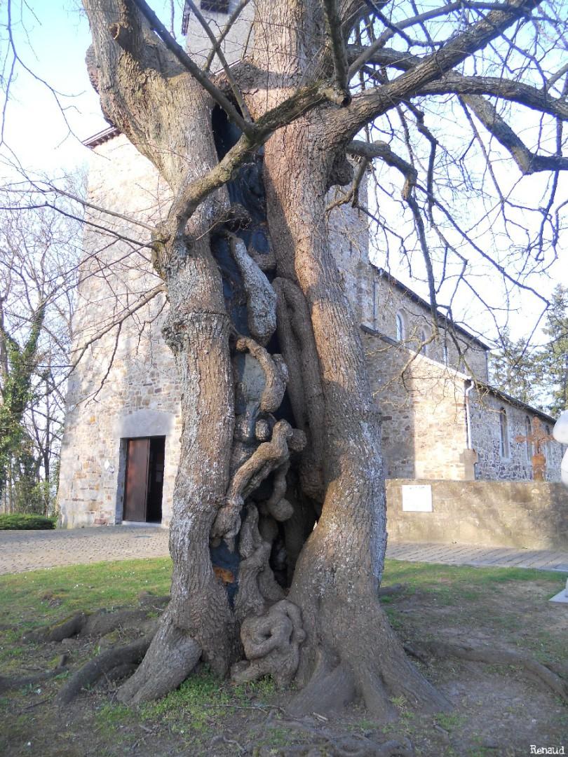 Le tileul de Waha, Province de Namur, Belgique, Renaud Gelaesen (6)