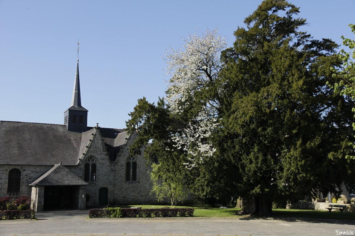 L'if merisier de Saint Launeuc Côtes d'Armor Yannick Morhan (17)